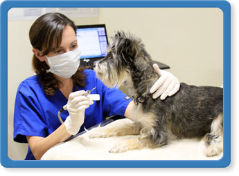Pet Wellness Services in Jacksonville