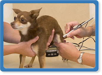 Laser Treatments for Jacksonville Dogs and Cats