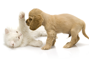 Caring for Your New Puppy or Kitten in jacksonville