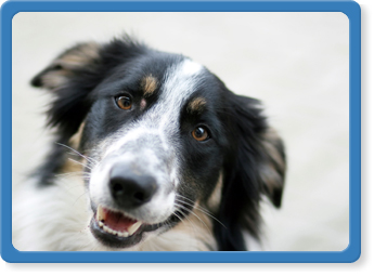 pet surgery, anesthesia in Jacksonville