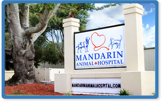 south jacksonville veterinary